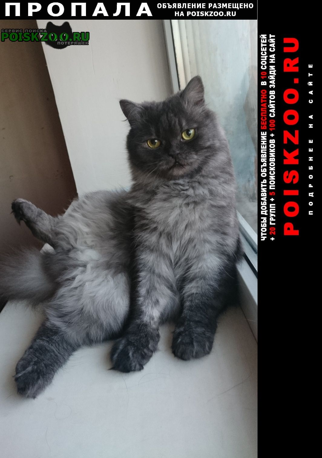 Белгород Пропала кошка