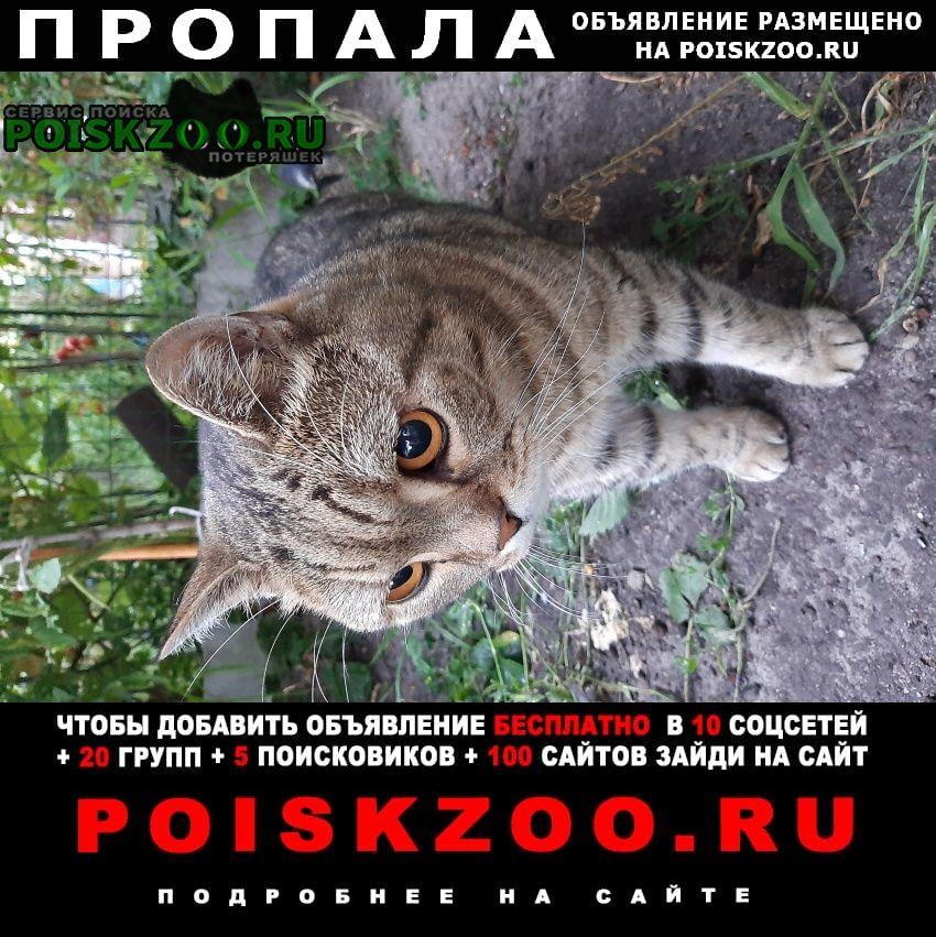 Пропала кошка Воронеж
