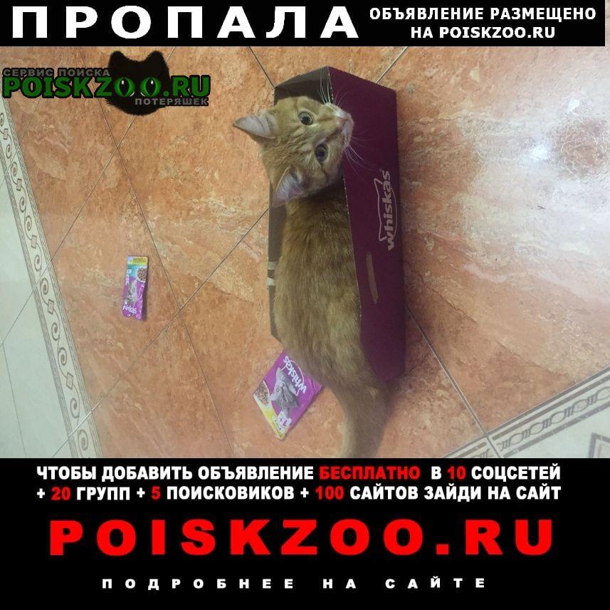 Екатеринбург Пропала кошка рыжий кот в юго-западе