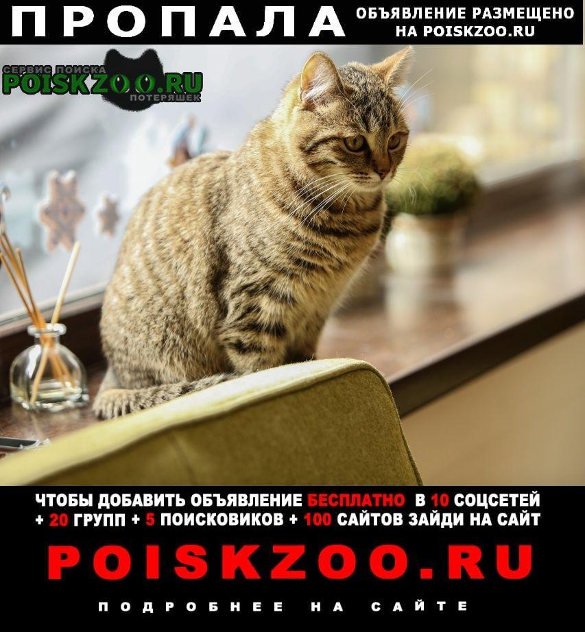 Симферополь Пропала кошка в аэропорту