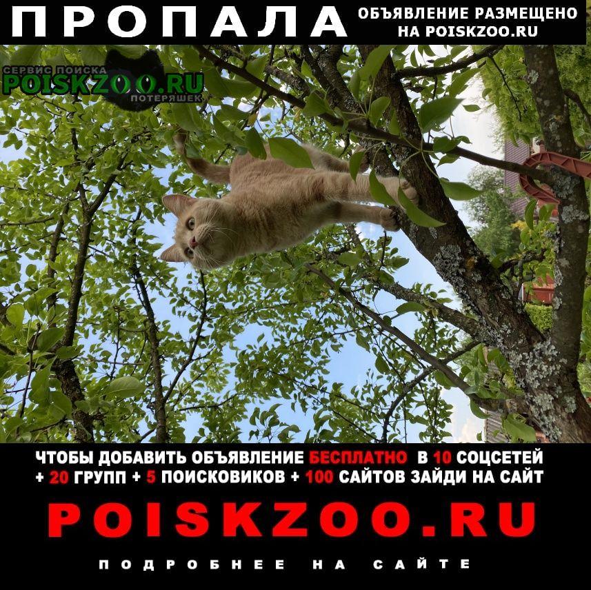 Пропала кошка Сергиев Посад