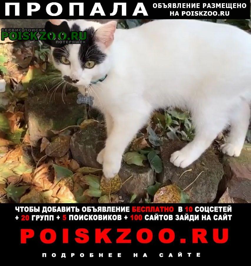 Калуга Пропала кошка