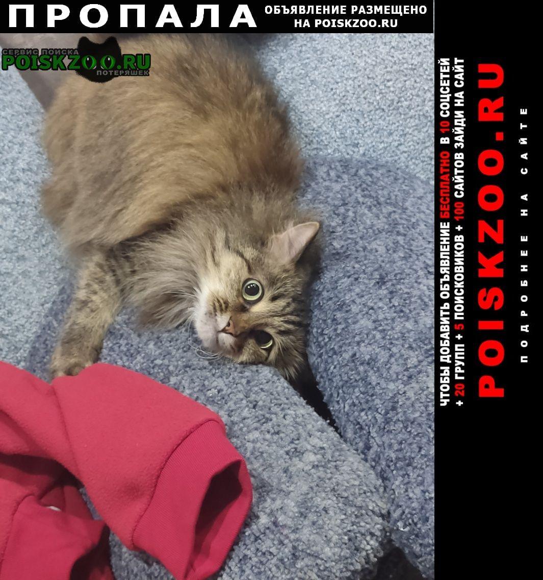 Набережные Челны Пропала кошка