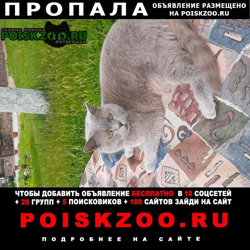 Пропала кошка помогите с поиском   Москва