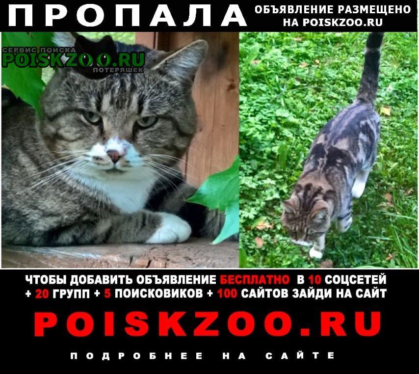 Солнечногорск Пропало домашнее животное кот