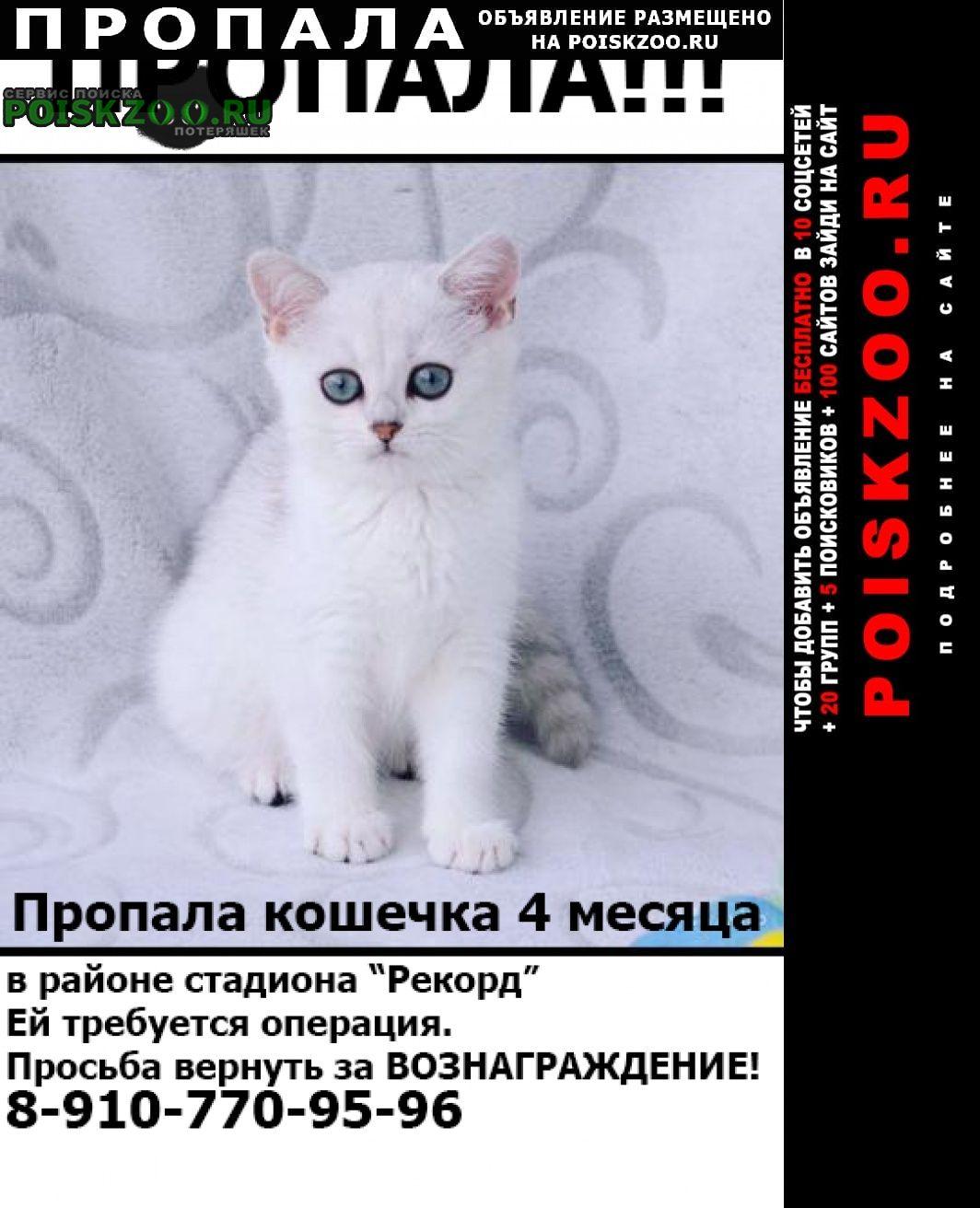 Александров Пропала кошка кошечка..