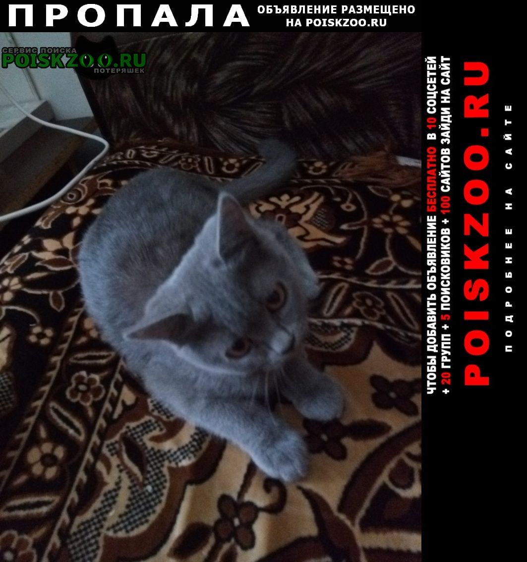 Пропала кошка 2.09. в районе ул.чапаева Краснодар