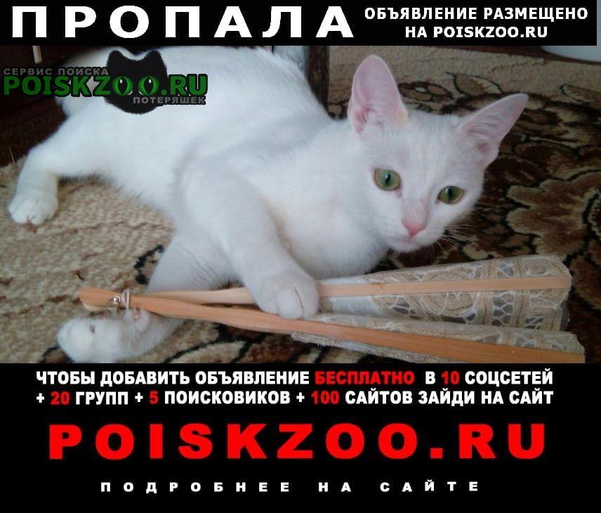 Волгоград Пропала кошка по кличке мери, вознаграждение