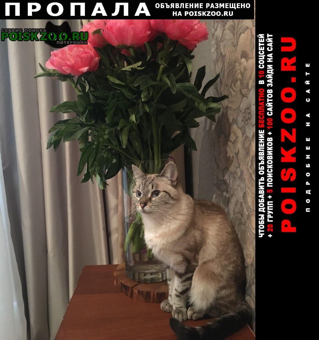 Пропала кошка 06 сентября в районе, 15 парковая улица Москва