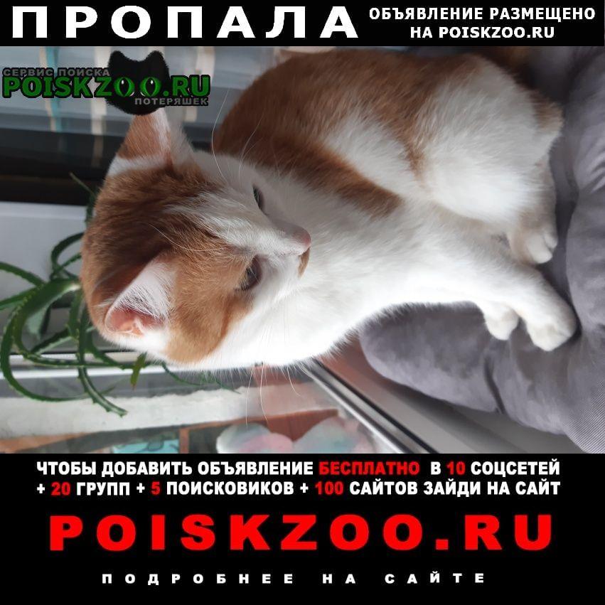 Пропала кошка Киров (Кировская обл.)