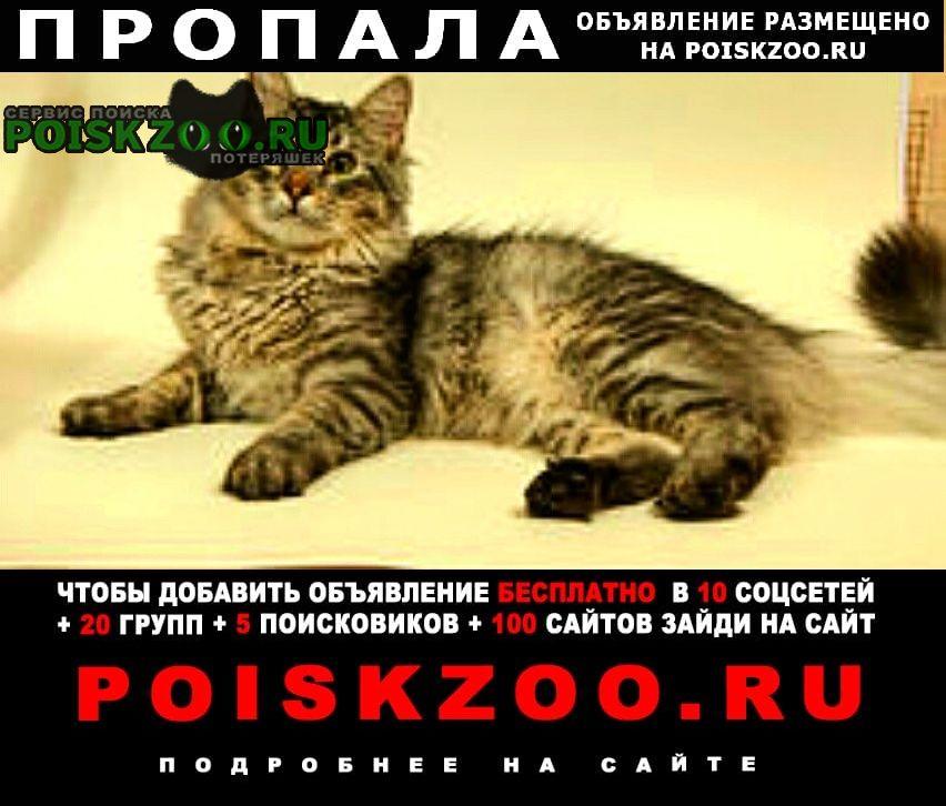 Новороссийск Пропала кошка кот