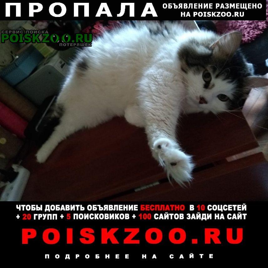 Пропала кошка нужна помощь в поисках Долгопрудный