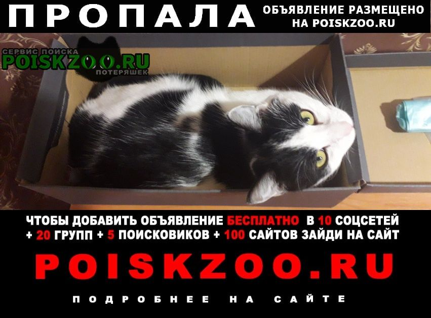 Пропала кошка Волгоград