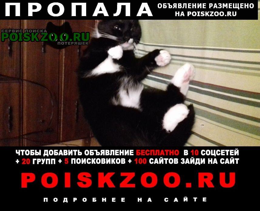 Санкт-Петербург Пропала кошка кот
