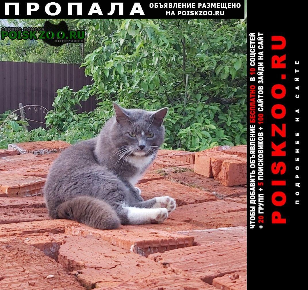 Пропала кошка Львовский