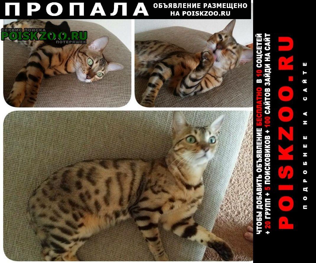 Пропала кошка Новокузнецк