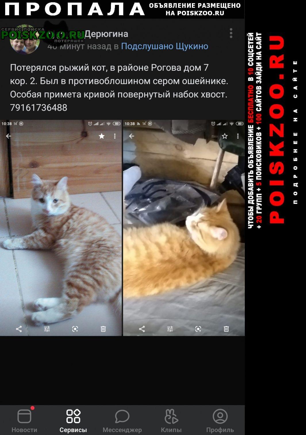 Пропала кошка убежал кот Москва