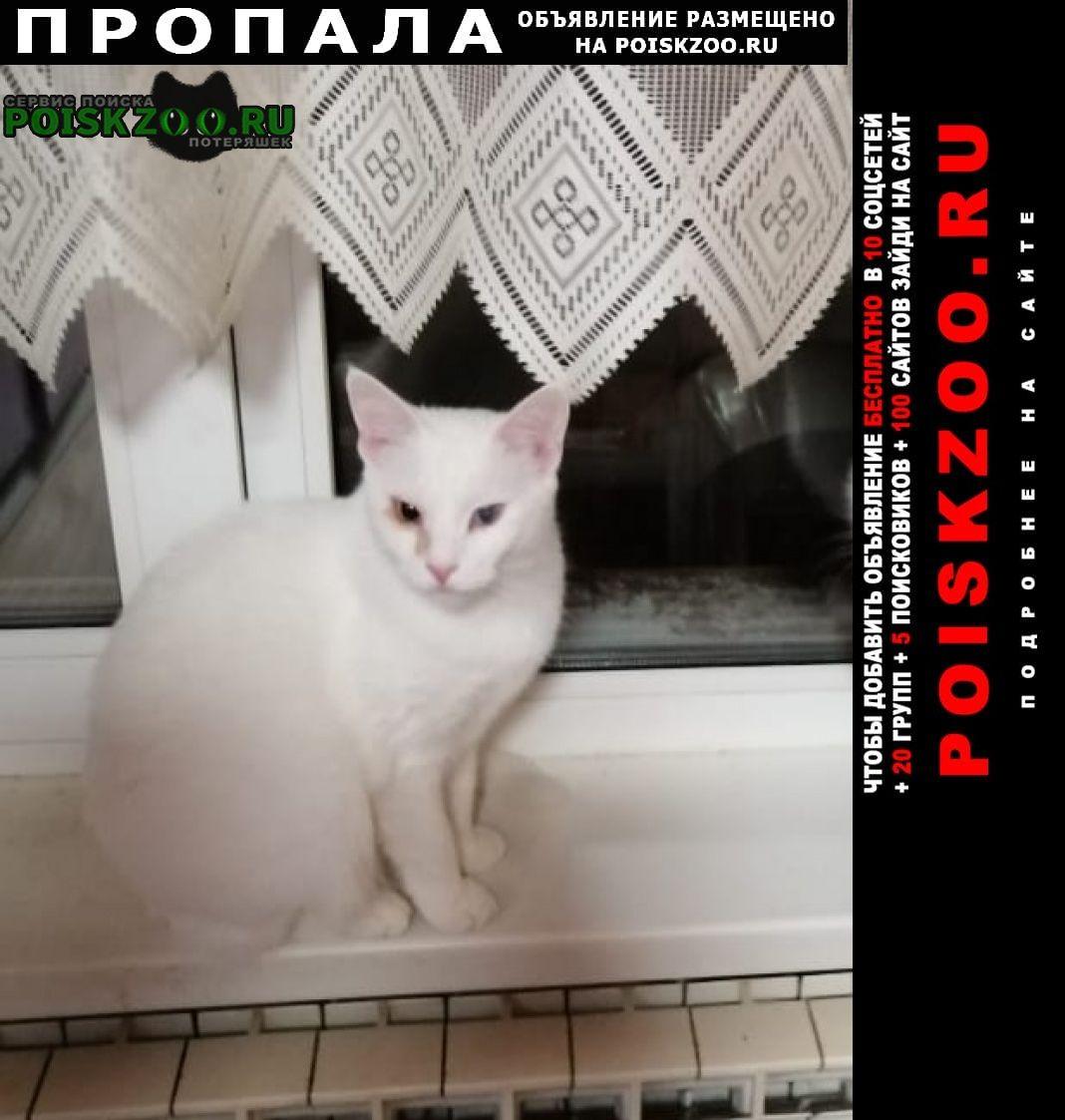 Ильинский (Московская обл.) Пропала кошка