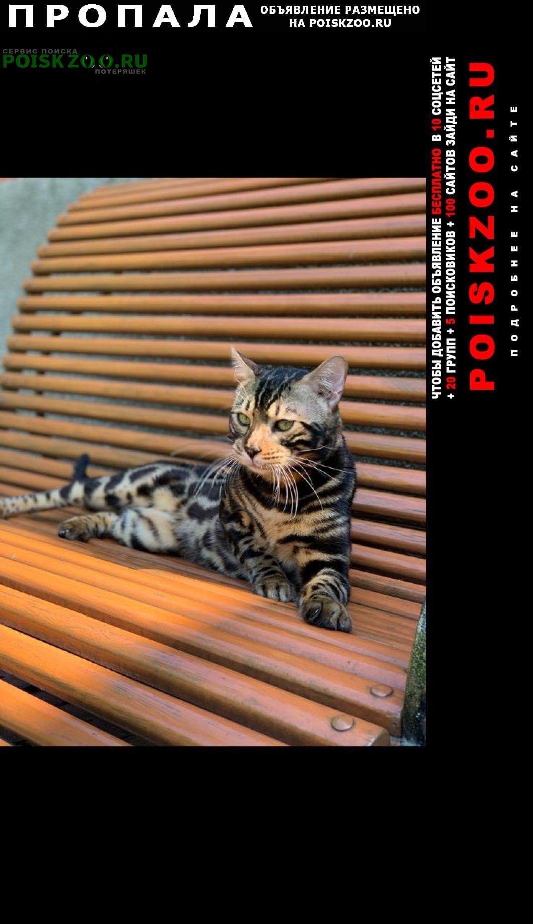 Московский Пропала кошка