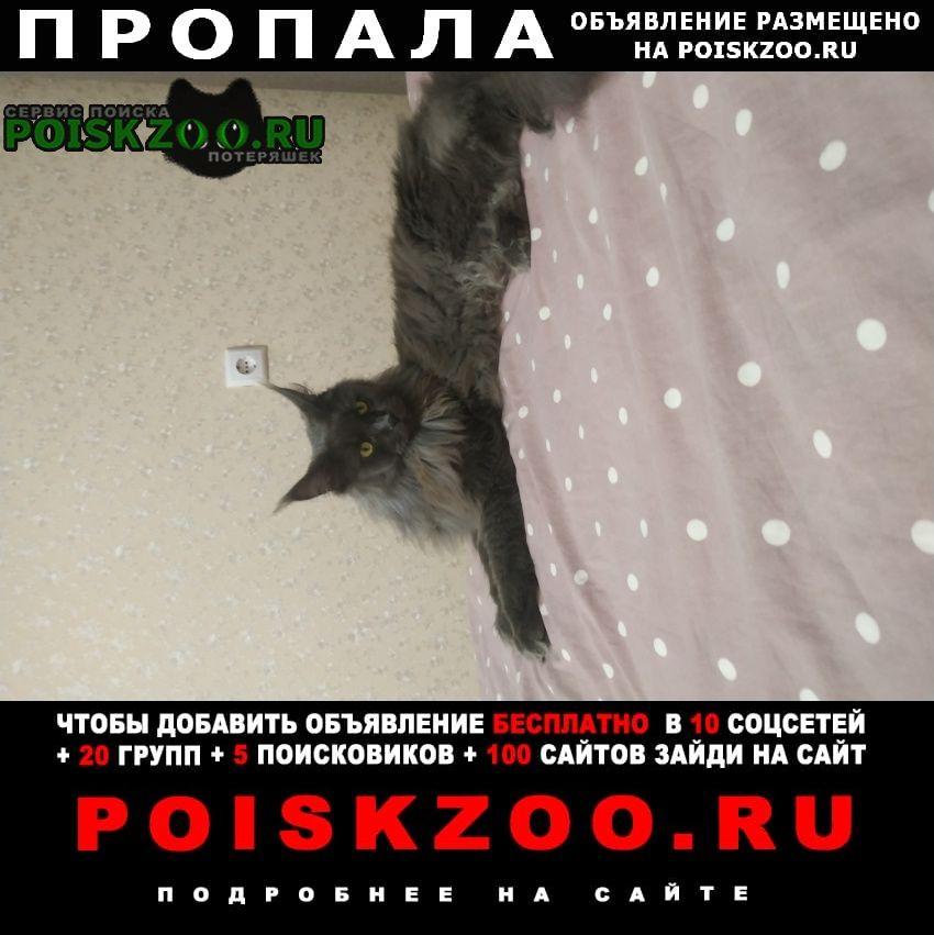 Ставрополь Пропала кошка