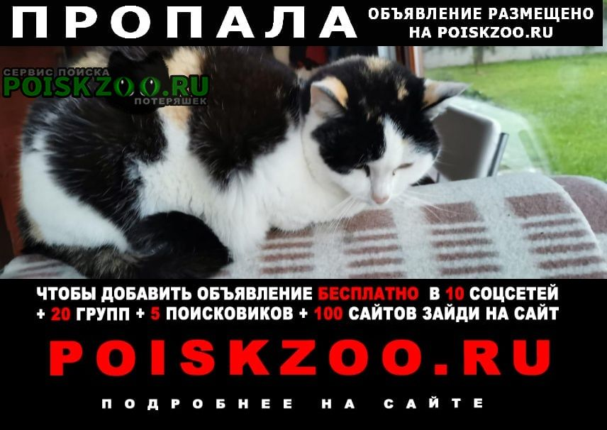 Пропала кошка ищем Пермь