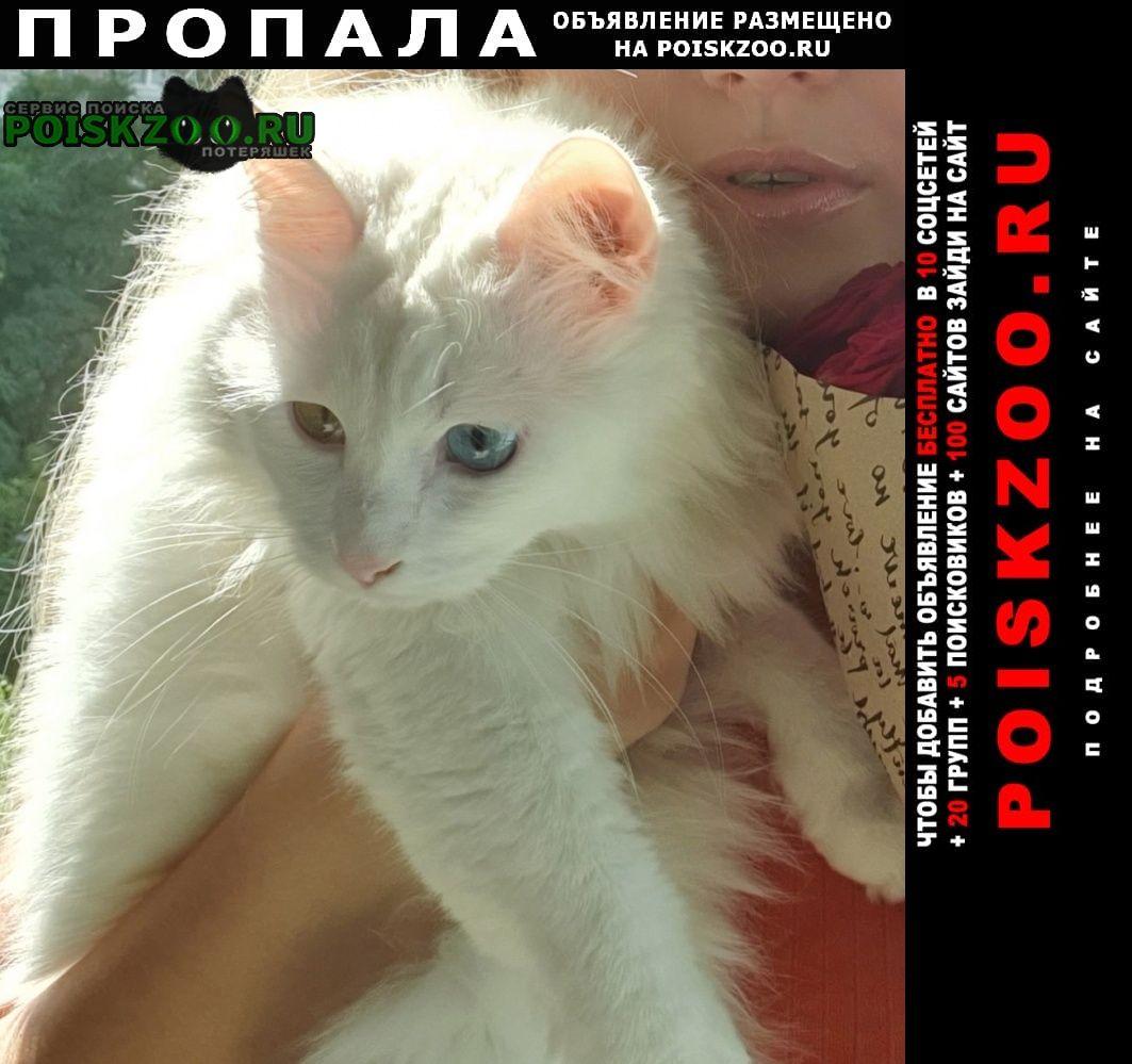 Пропала кошка глухая, разноглазая Волгоград