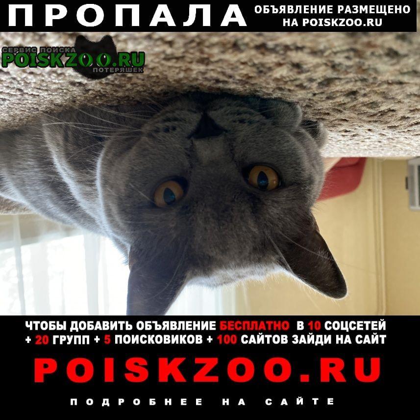 Воскресенск Пропала кошка помогите