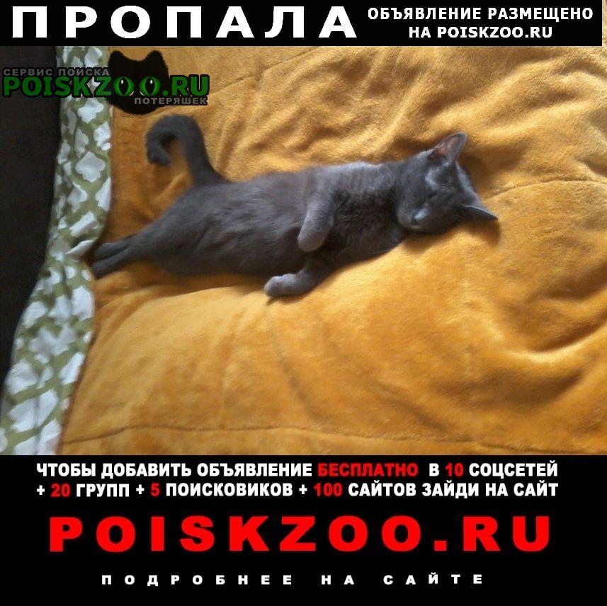 Пропала кошка котёночек окрас серый, Ярославль