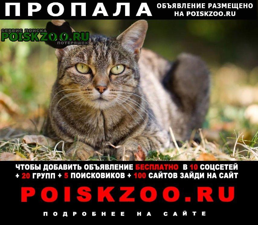 Пропала кошка если взяли себе то все равно позвоните Новороссийск