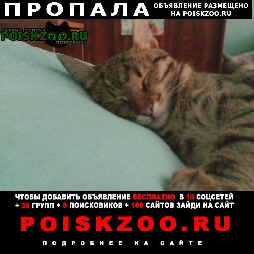 Пропала кошка помогите пожалуйста найти кошку Жердевка