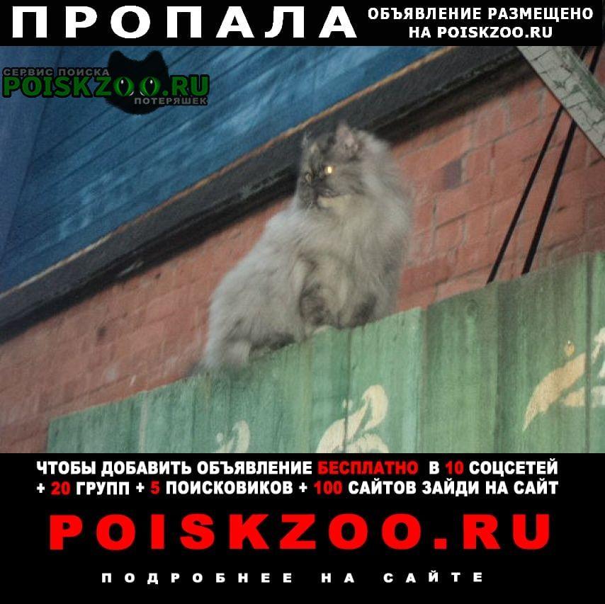 Пропала кошка серая перс Ярославль