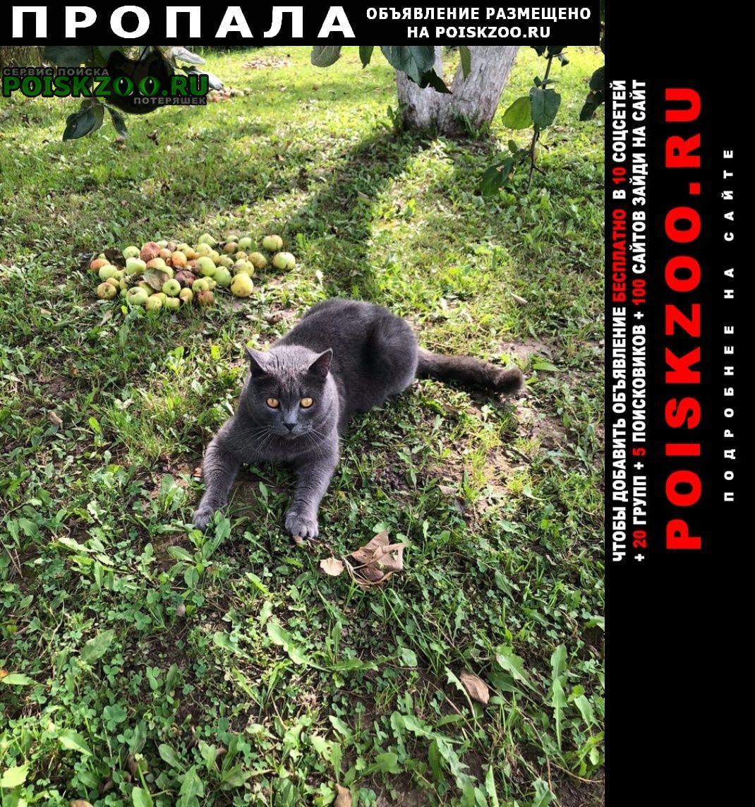 Нижний Новгород Пропала кошка британец