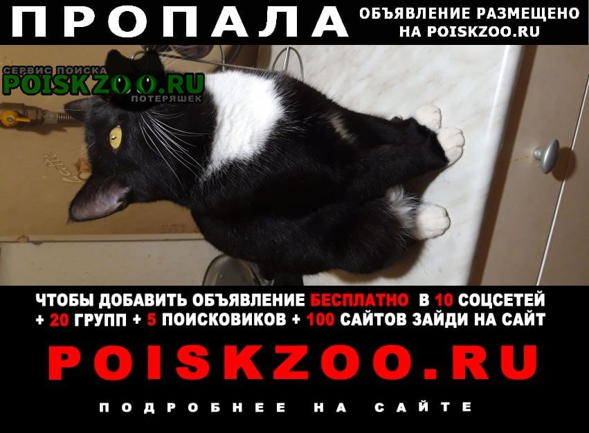 Дзержинск Пропала кошка