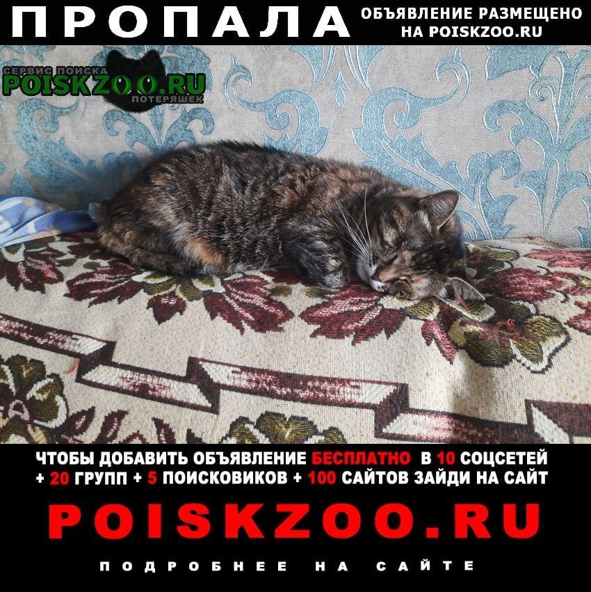 Брянск Пропала кошка