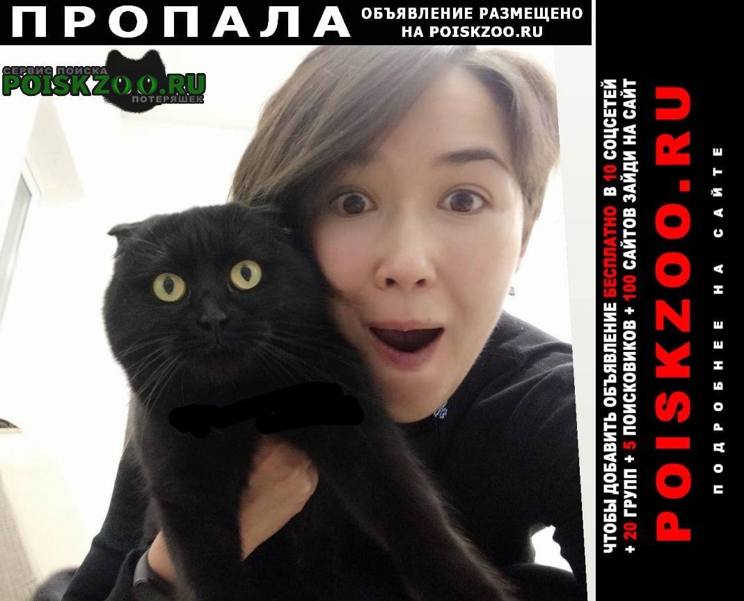 Пропала кошка черная вислоухая с серым ошейником Симферополь