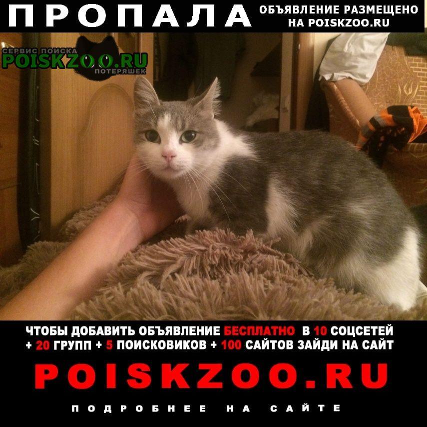 Ставрополь Пропала кошка бело-серая