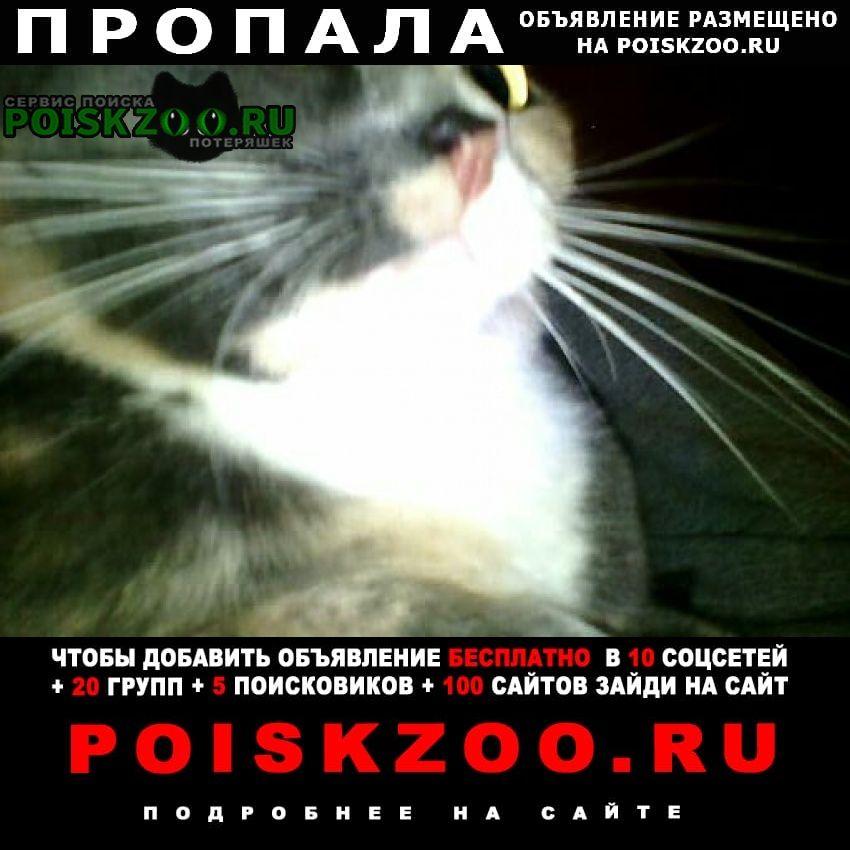 Екатеринбург Пропала кошка взрослая, домашняя