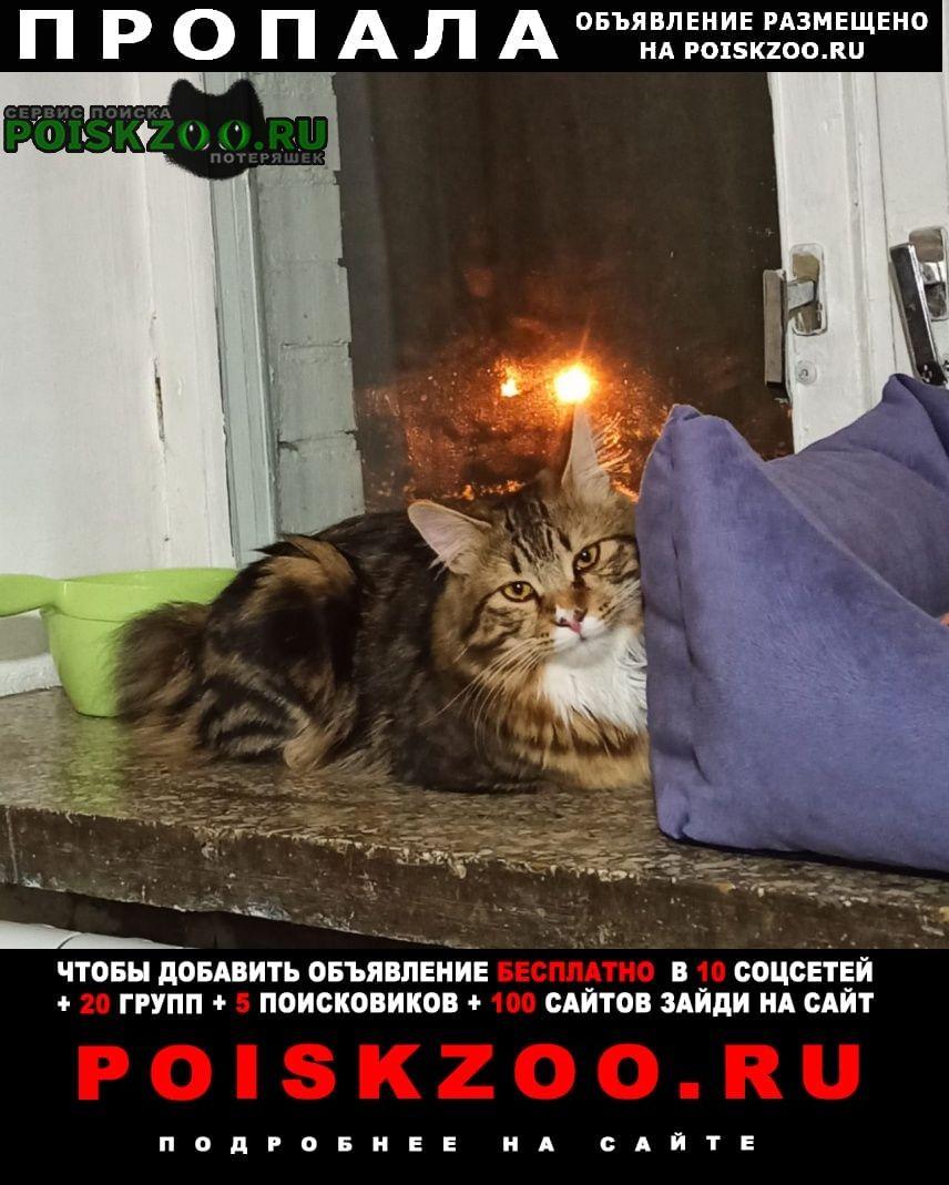 Пропала кошка гарибальди Москва