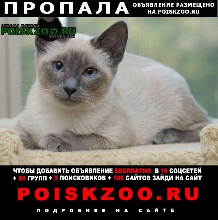 Ростов-на-Дону Пропала кошка помогите пожалуйста найти