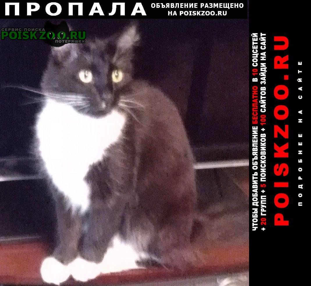 Ступино Пропала кошка кот