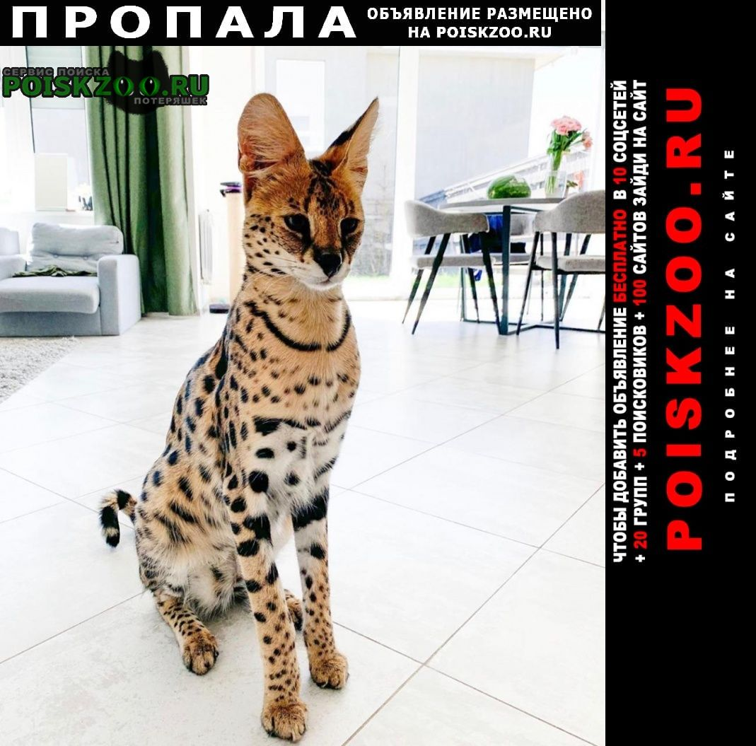 Пропала кошка сервал Москва