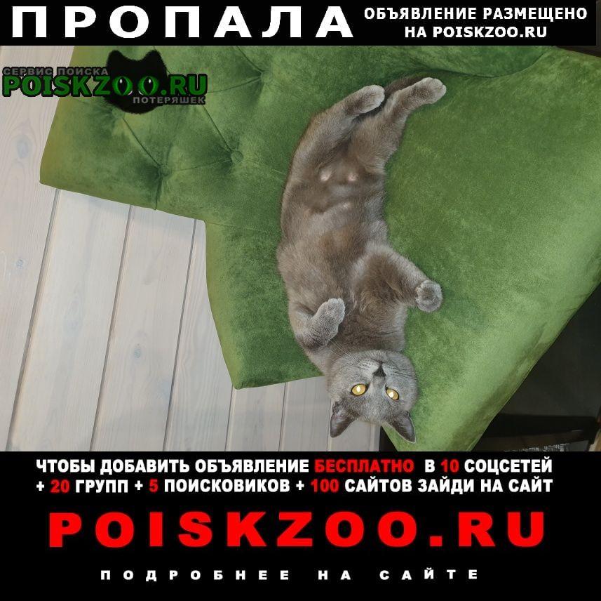Нижний Новгород Пропала кошка
