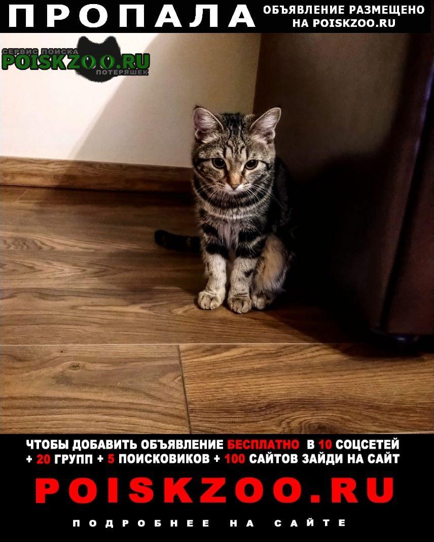 Новосибирск Пропала кошка вознаграждение - 5000руб