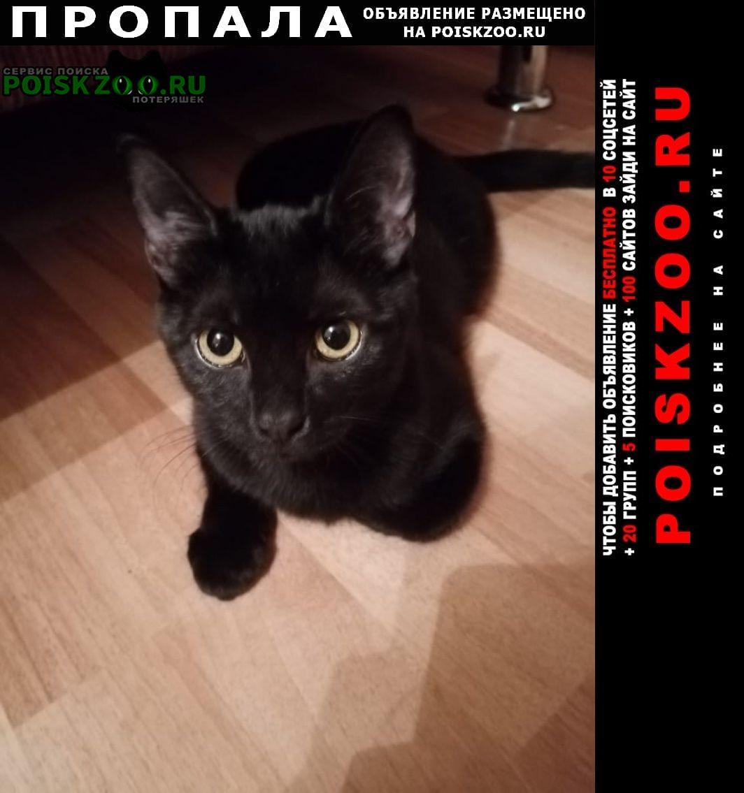 Пропала кошка черная -подросток (5-6мес) Ставрополь