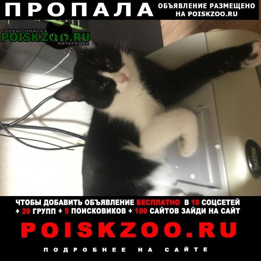 Пропала кошка в снт шиповник Казань
