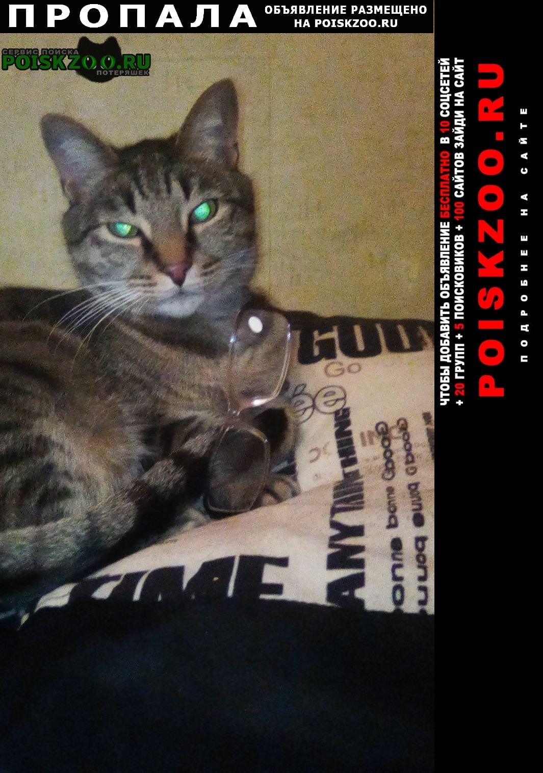 Тольятти Пропала кошка кот зовут василий