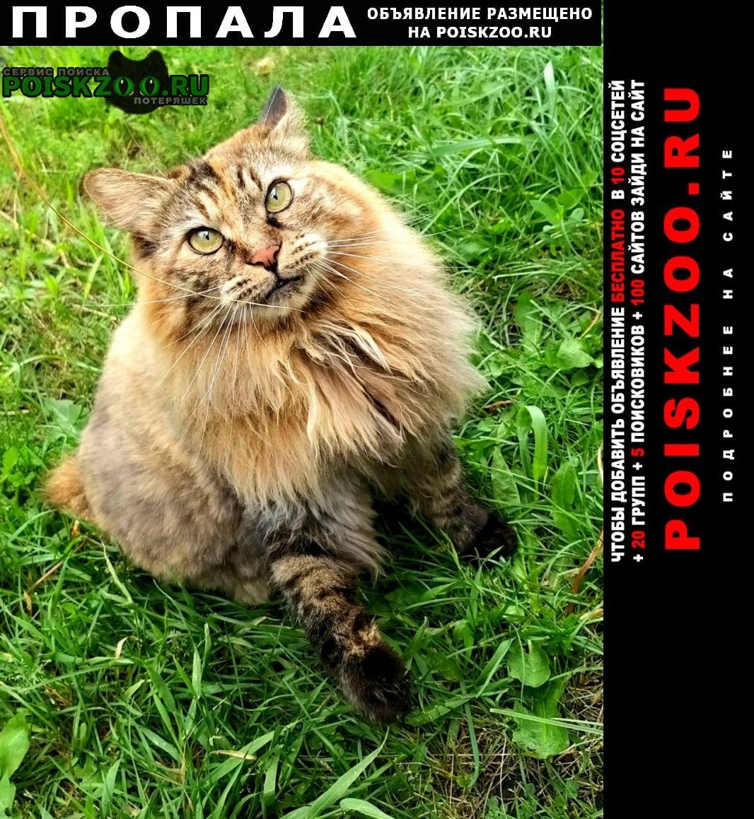 Воскресенск Пропала кошка помогите найти наше сердечко