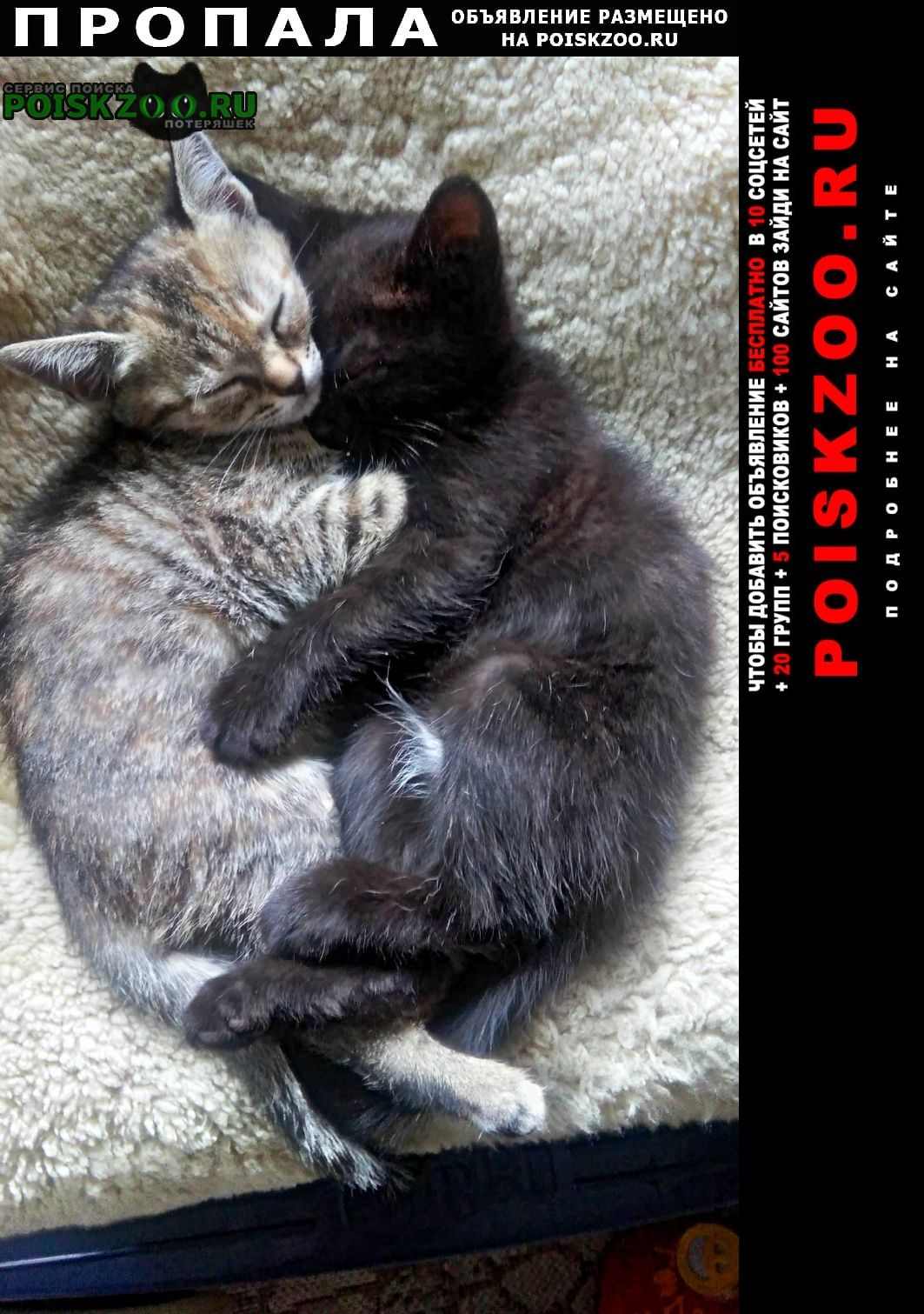 Феодосия Пропала кошка, район детской больницы