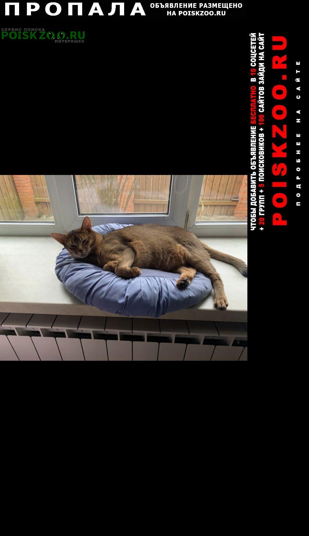 Пропала кошка кот рыжий 9 лет Серпухов