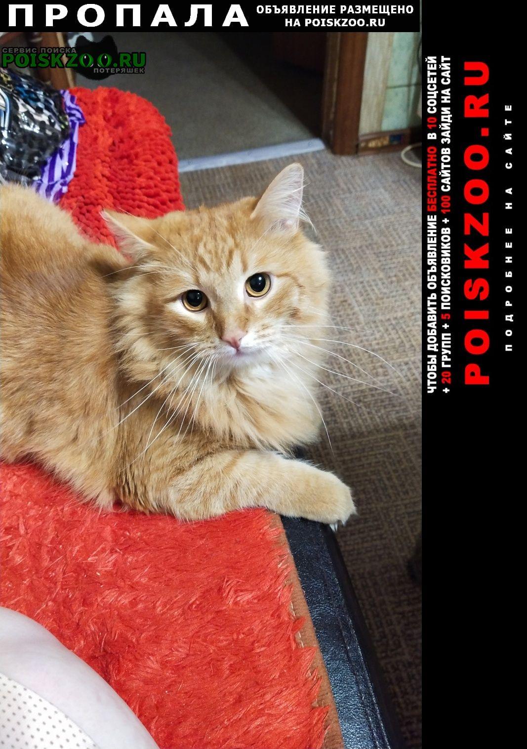 Пропала кошка рыжий кот  Люберцы